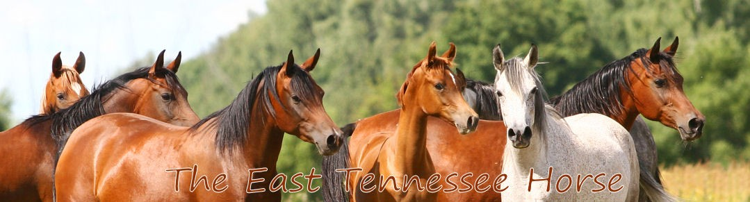 The East Tennessee Horse